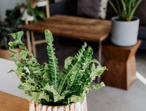 Faire son engrais naturel pour plantes vertes à la maison